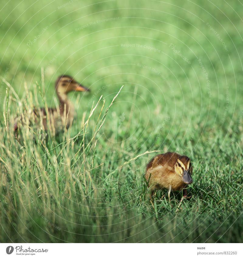 Wenn das Gelbe vom Ei blau macht ... Natur grün Sommer Freude Tier gelb Tierjunges Gefühle Wiese Gras Frühling Glück klein Wildtier Lebensfreude niedlich