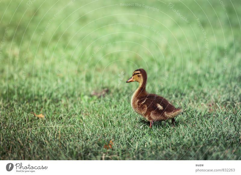 Ich mach jetzt los! Natur grün Sommer Freude Tier gelb Tierjunges Gefühle Wiese Gras Frühling Glück klein gehen Wildtier Lebensfreude