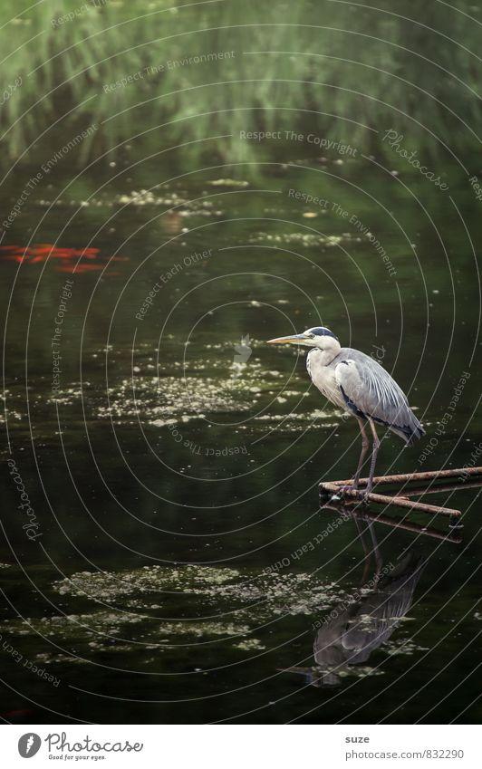 Ewig und drei Tage warten Natur grün Wasser Sommer Landschaft Tier Umwelt natürlich See Vogel glänzend wild Wildtier authentisch stehen