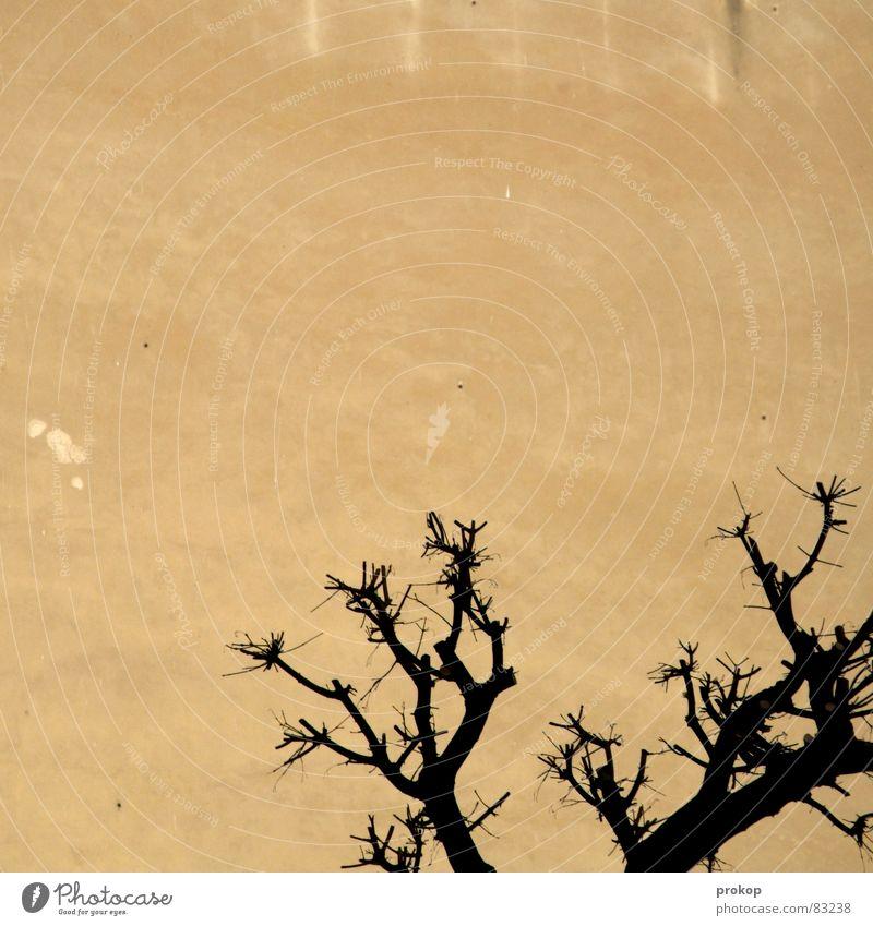 Mojave in Neukölln notleidend Baum verdorrt Mauer Putz Wand Einsamkeit Hintergrundbild Stadtleben Hoffnung Umwelt Umweltverschmutzung Konstruktion