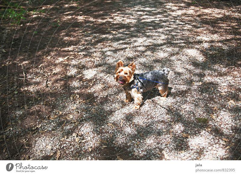 hündchen Park Tier Haustier Hund Terrier 1 ästhetisch klein Farbfoto Außenaufnahme Menschenleer Tag Licht Schatten Lichterscheinung Tierporträt Blick