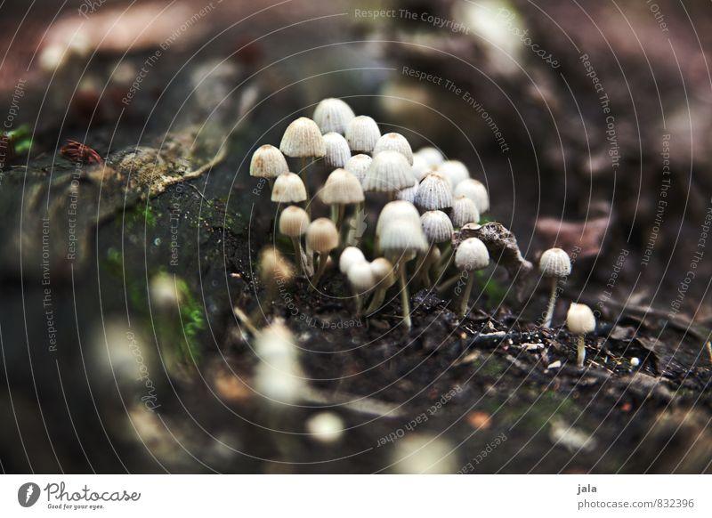 pilze Natur Pflanze Sommer Wald Umwelt natürlich klein Pilz Wildpflanze