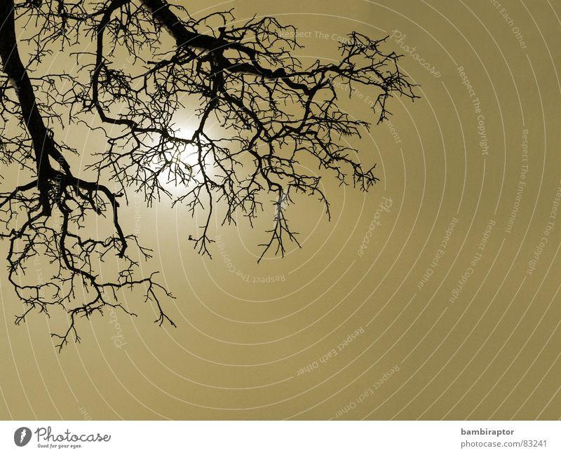 go for it! Baum eigenwillig Nebel Schleier Winter sich nach der sonne ausstrecken Ast Zweig Tod Himmel