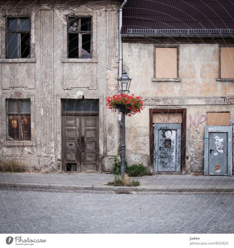 lasst blumen sprechen. alt Stadt Pflanze Sommer Blume Haus Fenster Wand Mauer Gebäude Fassade Wohnung Häusliches Leben Tür Kreativität kaputt