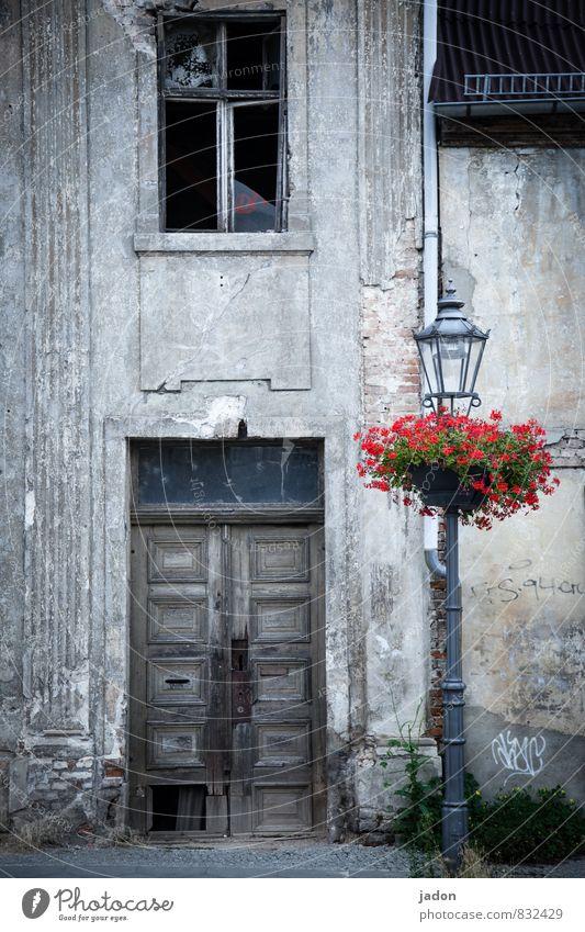 vorfreude. Lifestyle Stil Häusliches Leben Wohnung Haus Traumhaus Renovieren Lampe Baustelle Architektur Pflanze Blume Altstadt Mauer Wand alt kaputt Nostalgie