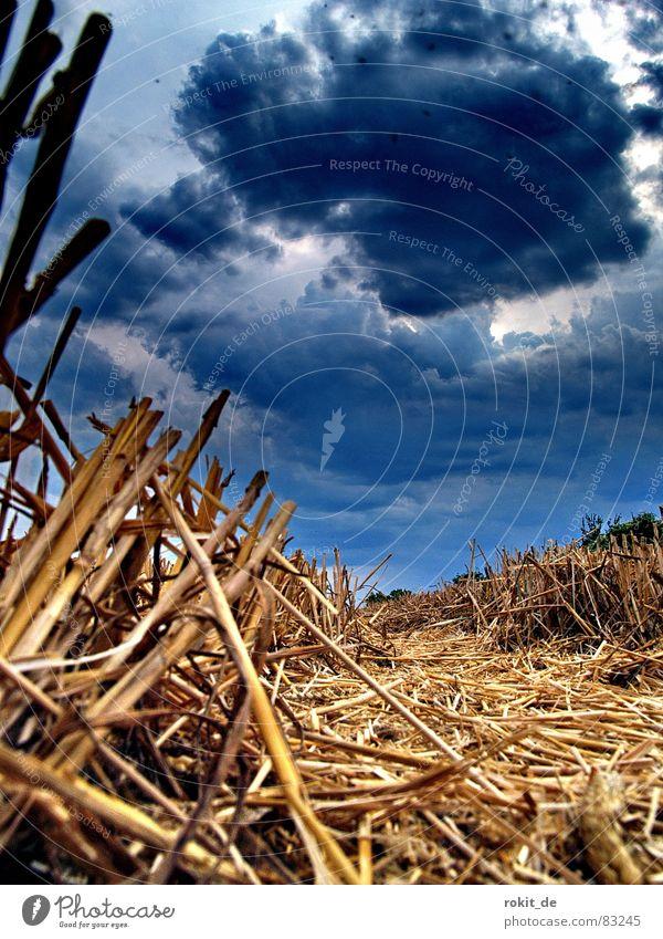 ...und sie brennt doch blau Wolken dunkel Tod Regen Erde Feld Angst klein Nebel Brand Feuer Bodenbelag bedrohlich Getreide