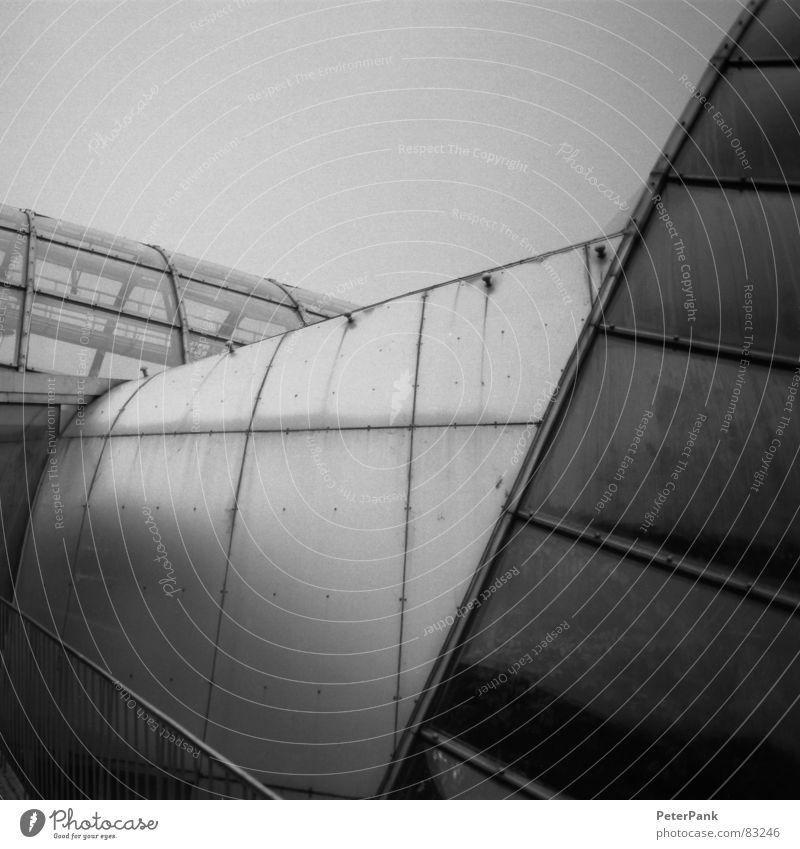 graz 3/03 (3) Glasbläser Haus schwarz Gebäude März Österreich Botanik Gewächshaus steil Quadrat Spiegel Reflexion & Spiegelung grau streben Fenster pflanzlich