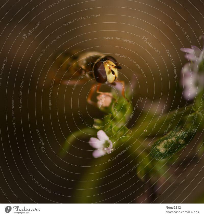 letzte Ernte Natur Pflanze Sommer Blume Blatt Tier Umwelt Wiese Herbst Blüte Frühling Garten fliegen braun Luft Park