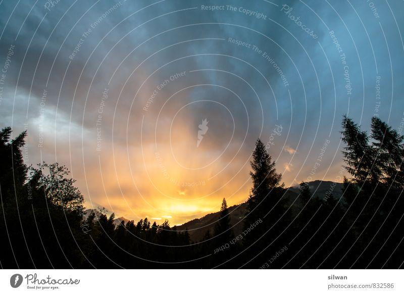 brennender Himmel Ferien & Urlaub & Reisen Landschaft Wolken Horizont Sonnenaufgang Sonnenuntergang Baum dunkel exotisch glänzend Wärme gelb gold orange schwarz