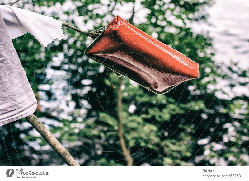 stilblüte. Natur Ferien & Urlaub & Reisen Pflanze Sommer Baum rot Umwelt Stil Lifestyle Schwimmen & Baden Design elegant Sträucher Ausflug Ast Schönes Wetter