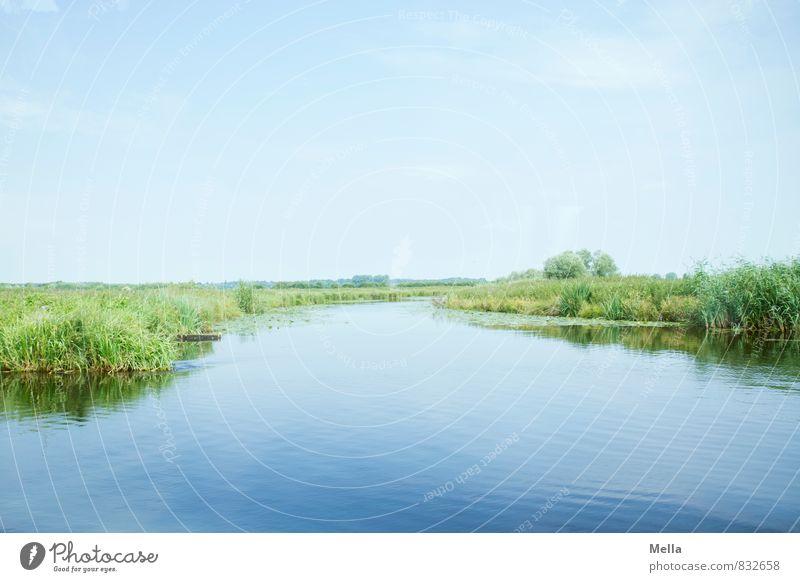 Caution - devil inside Umwelt Natur Landschaft Tier Wasser Himmel Sommer Flussufer Moor Sumpf natürlich blau grün Erholung Horizont ruhig Wasserstraße