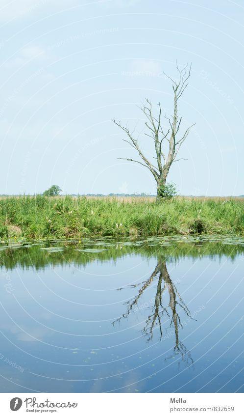 Mehr Moor Himmel Natur blau Wasser Baum ruhig Landschaft Umwelt Gras Küste natürlich Idylle Ast Flussufer kahl Sumpf
