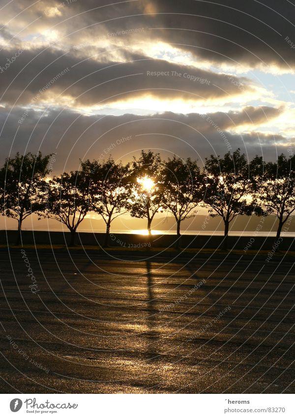 Sonnenuntergang hinter der Baumreihe Gegenlicht Asphalt Wolken schlechtes Wetter Himmel Himmelskörper & Weltall