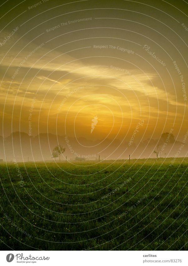 auf dem Land Morgennebel Nebel Wiese Zaun Dunst Wolken Farblosigkeit Licht Gras Nebelschleier Schleier Sonnenaufgang grün Herbst Morgendämmerung Seil Weide