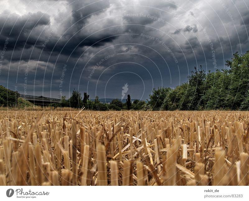 Der Sensenmann war da... Erdmaus Unwetter Donnern Stroh Feld dunkel Wolken beerdigen Gewitterregen Regen Erde Strohfeuer Samen Furche Untergrund Dröhnen