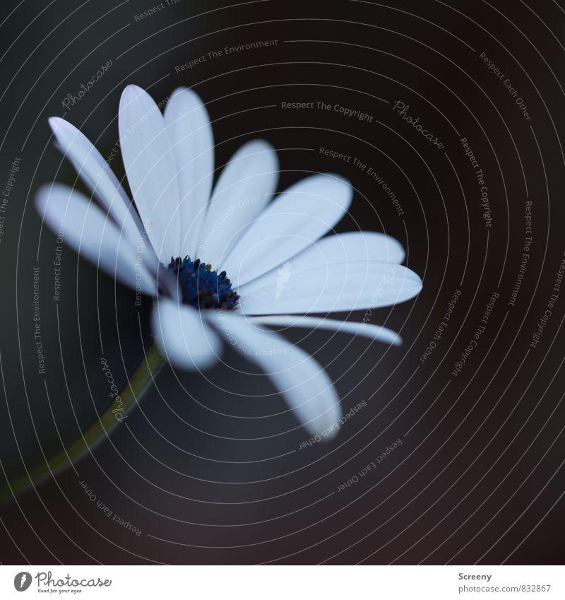 Zart von der Seite genommen... Natur blau Pflanze grün weiß Sommer Blume schwarz Wiese Blüte Frühling klein braun Park Wachstum ästhetisch