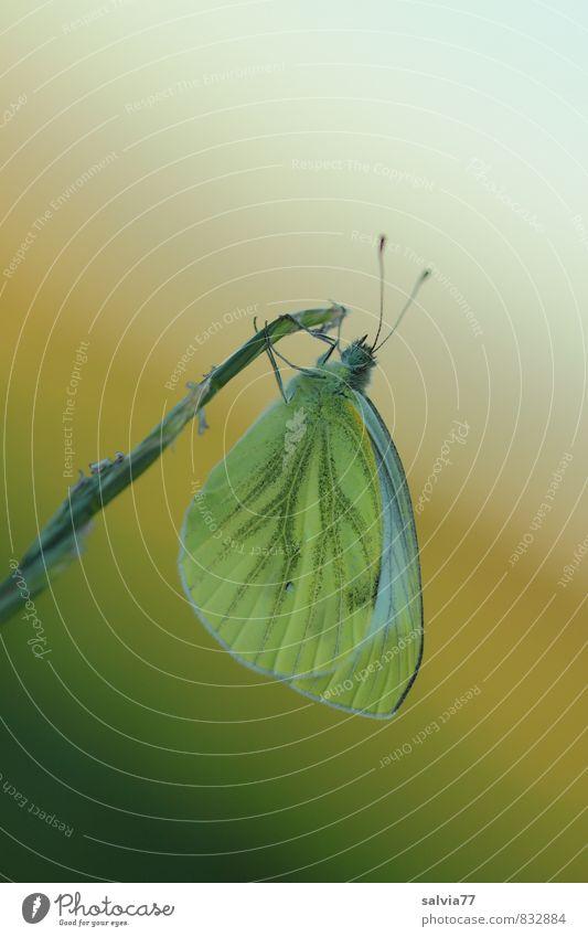 no sun no fun Natur Sommer Einsamkeit ruhig Tier Umwelt Leben Frühling Gras Stimmung träumen Wildtier warten Flügel Klima schlafen