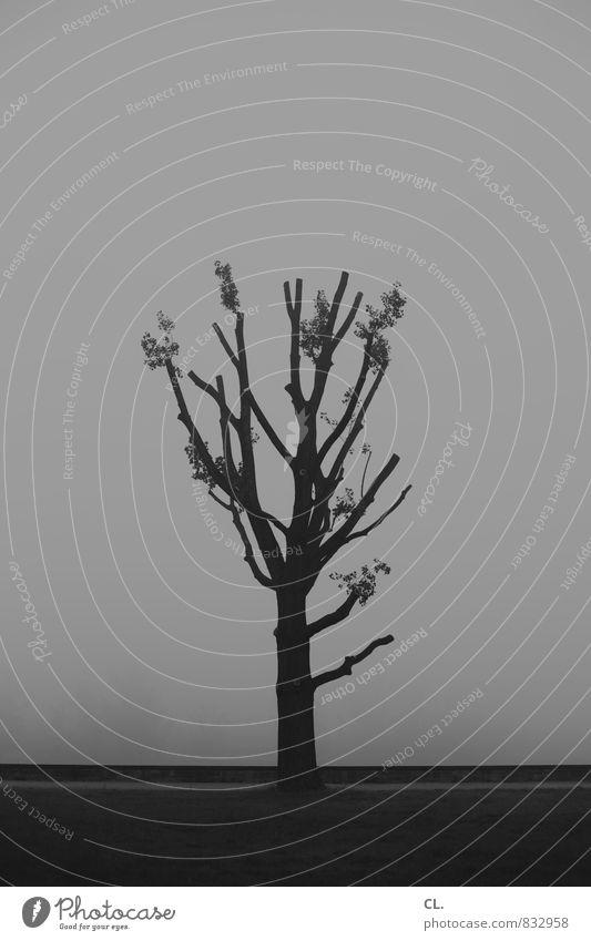 nebel Natur Baum Einsamkeit ruhig Landschaft Umwelt Traurigkeit grau Nebel trist Baumstamm Sehnsucht Fernweh Baumstumpf