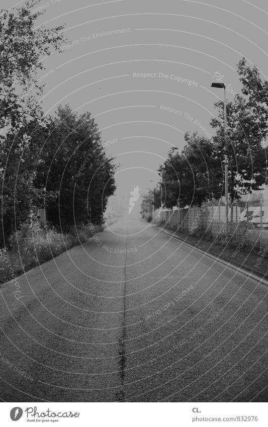 weg Umwelt Natur Landschaft Nebel Baum Sträucher Verkehr Verkehrswege Straße Wege & Pfade dunkel trist grau Sehnsucht Fernweh Zukunftsangst Ziel Schwarzweißfoto