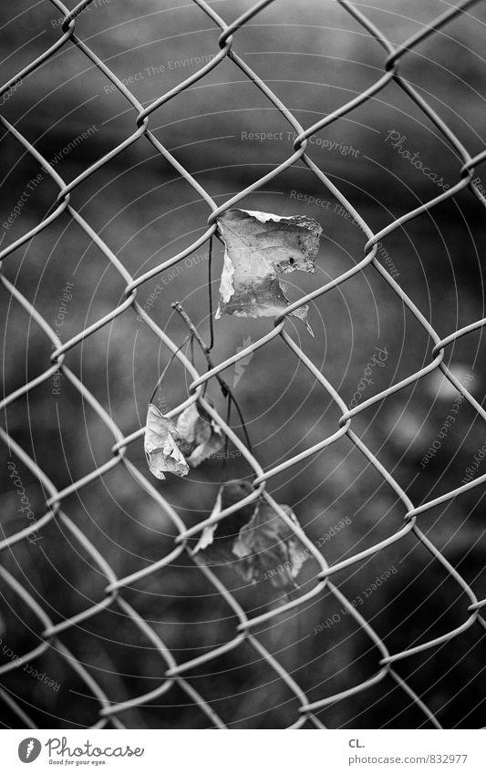 wind Umwelt Natur Herbst schlechtes Wetter Wind Sturm Blatt Garten Park trist grau Traurigkeit Sehnsucht Vergänglichkeit Zaun Schwarzweißfoto Außenaufnahme