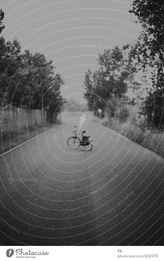 pause Fahrradfahren Natur Landschaft Baum Verkehr Verkehrswege Straße Wege & Pfade Bewegung Freizeit & Hobby Pause Sport Ziel Fahrradtour Schwarzweißfoto