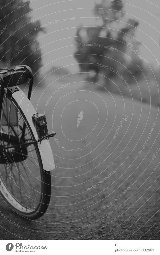 tour Verkehr Verkehrsmittel Verkehrswege Straßenverkehr Fahrradfahren Wege & Pfade Beginn Pause Perspektive Ziel Zukunft Fahrradtour Fahrradweg Farbfoto
