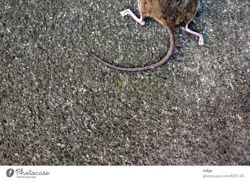 Es war einmal. Tier Wildtier Totes Tier Maus Mauseschwanz 1 liegen unten braun grau Gefühle Tod Schmerz Erschöpfung Ende Leben Natur Opfer Beute Hälfte