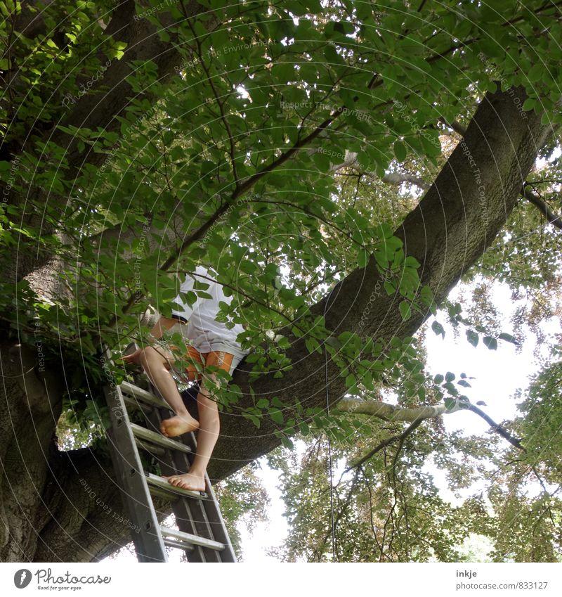 Rettung naht. Freizeit & Hobby Spielen Junge Kindheit Jugendliche Leben Unterleib 1 Mensch 8-13 Jahre Natur Sommer Schönes Wetter Baum Buche Garten Park Wald