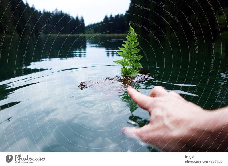 anstupsen Lifestyle Freizeit & Hobby Spielen Ferien & Urlaub & Reisen Ausflug Sommer Junge Frau Jugendliche Erwachsene Leben Hand 1 Mensch Umwelt Natur
