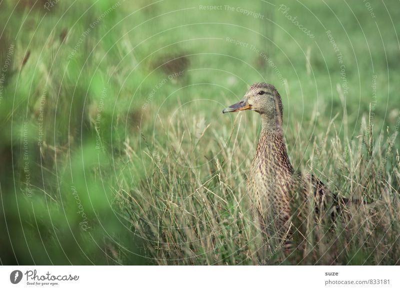 Tierich Verstecken Natur grün Sommer Freude Gefühle Wiese Gras Frühling natürlich Glück klein Wildtier authentisch Lebensfreude niedlich