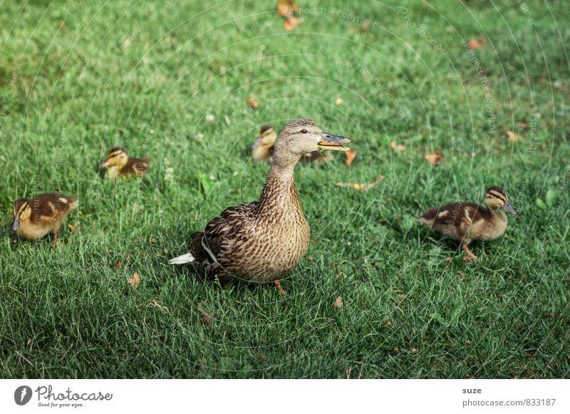 Lirum, larum Löffelstiel ... Kindheit Natur Frühling Sommer Gras Wiese Tier Wildtier Tierjunges Tierfamilie klein niedlich grün Gefühle Freude Glück
