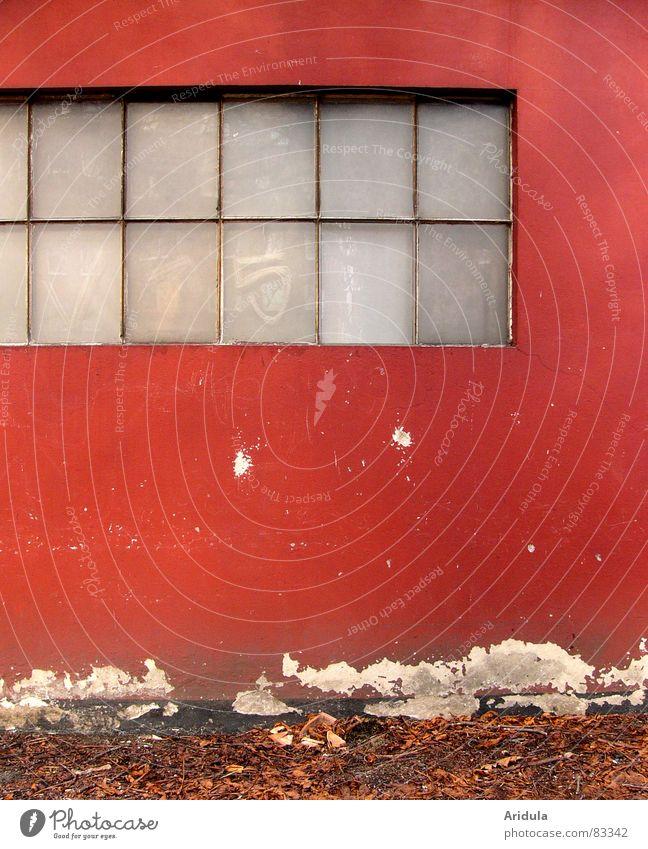 rote wand Wand Verfall kaputt Haus Garage Werkstatt Fenster trüb blind Putz Blatt Herbst braun Zähne zeigen Gebäude Strukturen & Formen Untergrund Anstrich