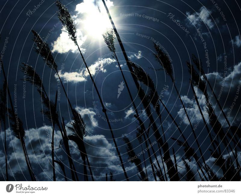 Blue Sky Himmel Wolken Sonnenstrahlen Gegenlicht back-light sunbeams snail sky heaven reed clouds Schnecke