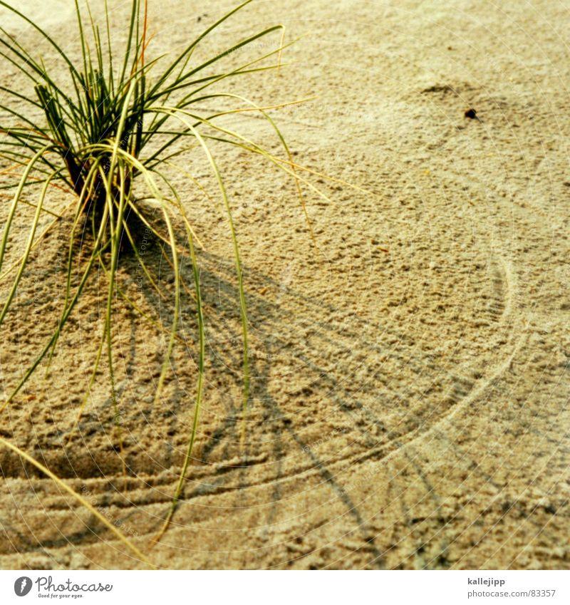 circle in the sand Strand Sand Küste Stranddüne Flut Gezeiten Ebbe Sandstrand Strandgut Dünengras