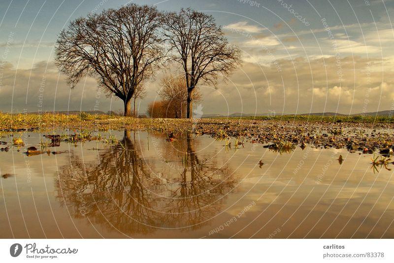 Tim und Struppi II Horizont Baum 2 Fußweg Pfütze Reflexion & Spiegelung Wolken dramatisch Wind Leidenschaft Mitte Symmetrie Weißabgleich Baumstamm Baumstruktur