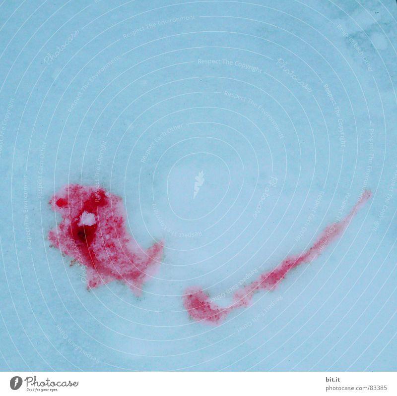 KÄPT'N IGLU Winter Schnee Umwelt Natur Klima Eis Frost frieren außergewöhnlich kalt nass rot Blut gefroren Blutspur Blutfleck Vor hellem Hintergrund Tropfen