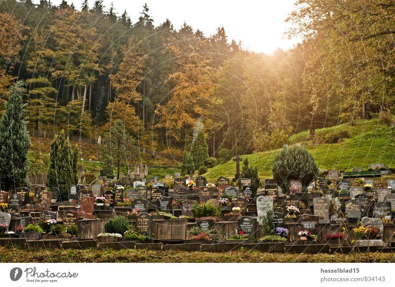 ruhe. Reichtum Nachtleben Trauerfeier Beerdigung Großeltern Senior Großvater Großmutter Leben ruhig Friedhof Wald letzte Ankunft Himmel (Jenseits) Tod Grabstein