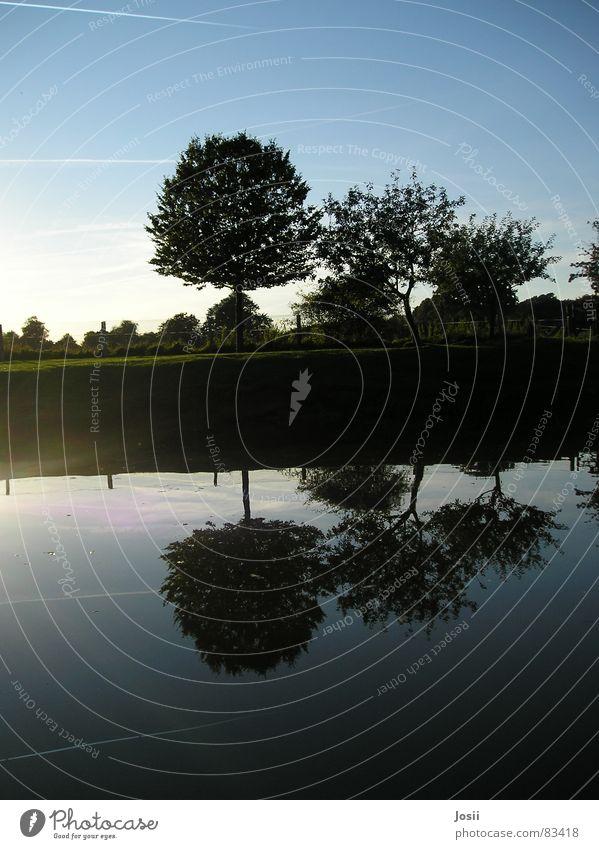 Spiegelbild Kondensstreifen Teich Baum Baumreihe schwarz Gewässer Wiese grün Beleuchtung Zaun Apfelbaum Sommer Herbst Reflexion & Spiegelung Wasser Himmel Reihe