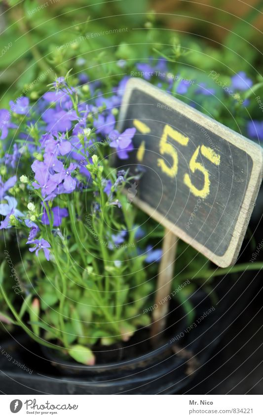 schnapspflanze Pflanze grün Blume Umwelt Garten Wachstum frisch Blühend Ziffern & Zahlen violett Duft Tafel Marktplatz verkaufen Frühlingsgefühle Billig