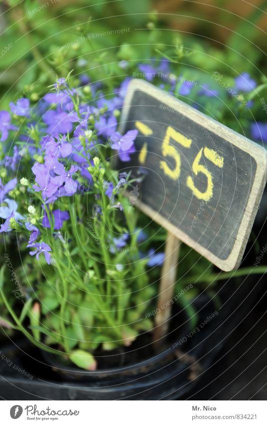 schnapspflanze Umwelt Pflanze Blume Garten Blühend grün Frühlingsgefühle Billig Preisschild Gärtnerei Ziffern & Zahlen Wachstum Duft Rittersporn violett
