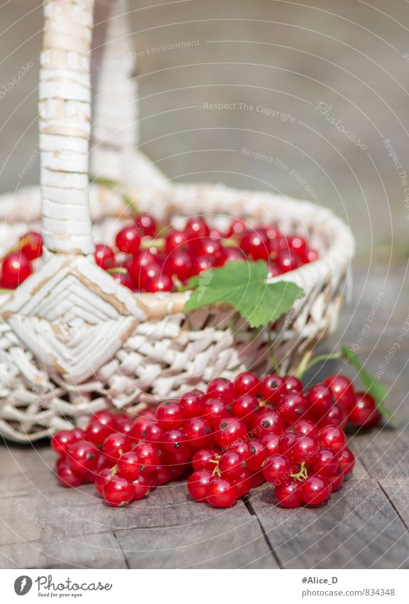 Bio Rote Johannisbeeren Natur weiß rot Gesunde Ernährung grau Gesundheit Garten Lebensmittel glänzend Frucht frisch lecker Bioprodukte Frühstück Stillleben