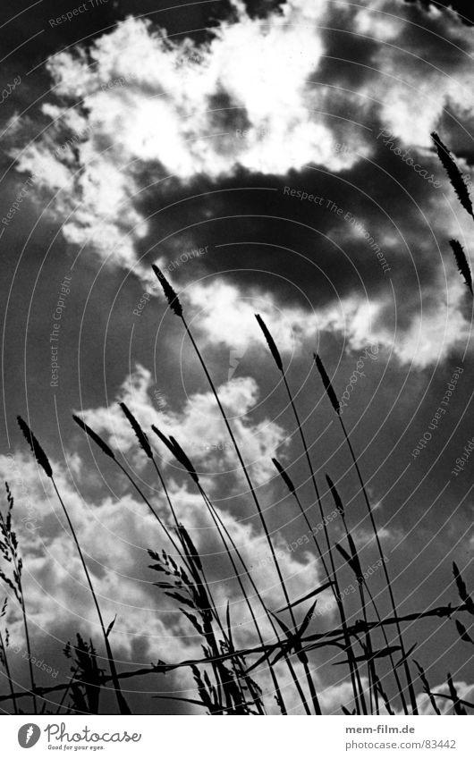 grashimmel Himmel grün Wolken Wiese Gras Weide Halm Pflanze Stacheldraht verdunkeln