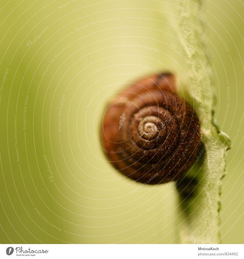 schneckenpost. Natur Pflanze Sommer Baum Blatt Tier Umwelt Frühling Garten Angst Schönes Wetter Urelemente Schnecke Grünpflanze Nutztier Schneckenhaus