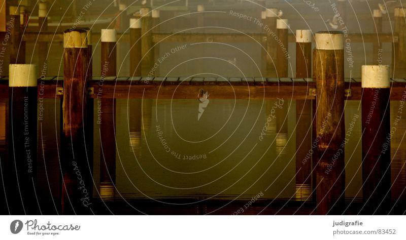 Am Hafen See Lachmöwe Nebel Morgen Wasserfahrzeug Steg ruhig Einsamkeit Stimmung Sonnenaufgang Wasseroberfläche Reflexion & Spiegelung Möwe Vogel Prerow
