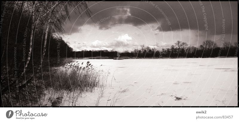 Verschneiter See Himmel Natur Baum Pflanze Wolken Winter ruhig Wald Landschaft Ferne Umwelt Schnee See Horizont Eis Wetter