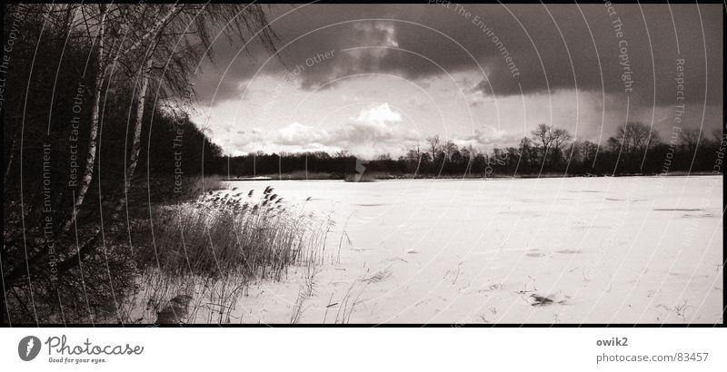 Verschneiter See Winter Schnee Umwelt Natur Landschaft Pflanze Himmel Wolken Gewitterwolken Horizont Klima Wetter Eis Frost Baum Sträucher karg Schilfrohr kahl