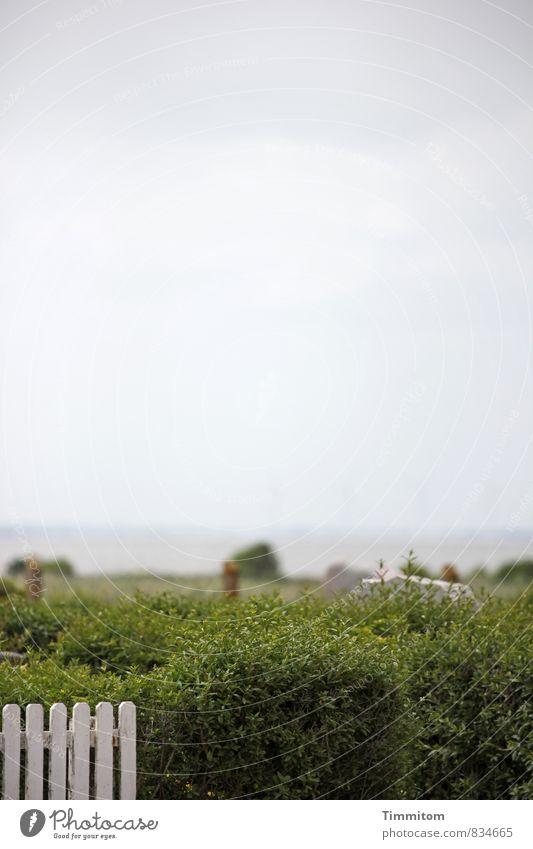 Ruhestätte. Umwelt Natur Urelemente Wasser Wolken Wetter Pflanze Sträucher Fjord Dänemark Holz ästhetisch einfach natürlich grau grün weiß Gefühle ruhig
