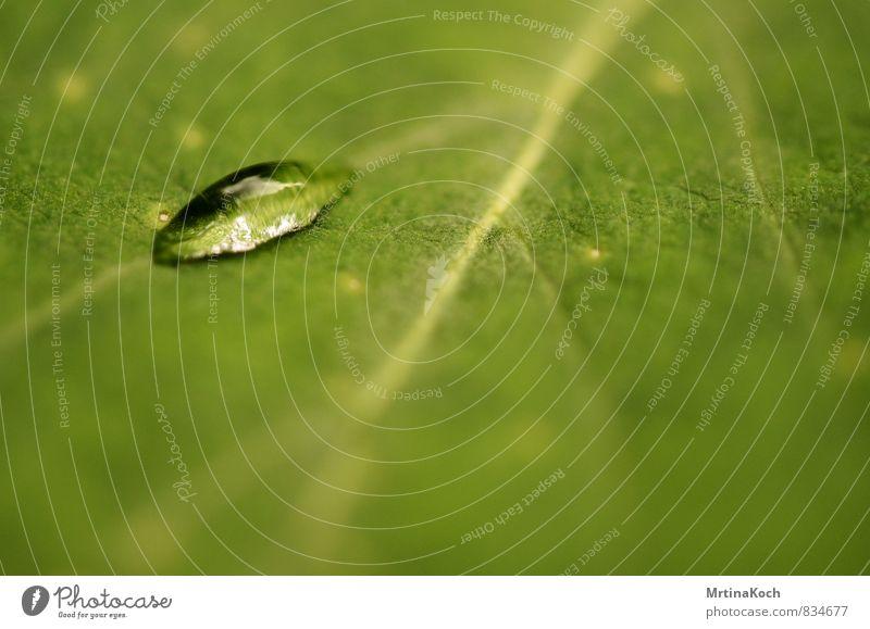 tautropfen. Umwelt Natur Pflanze Frühling Sommer Herbst Schönes Wetter Blume Gras Blatt Garten Park Wiese Zufriedenheit Müdigkeit Schmerz Sehnsucht Tau Tropfen