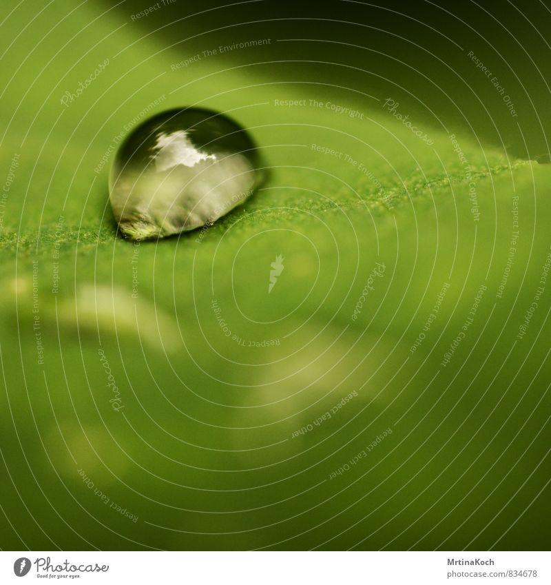 my only one. Natur Pflanze grün Wasser Sommer Blatt Umwelt Wiese Gras Frühling elegant Wassertropfen Schönes Wetter einzigartig Kitsch Grünpflanze
