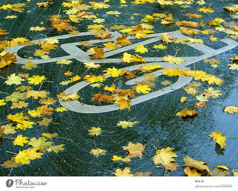 BOULEVARDBLATT blau gelb Straße Herbst Wege & Pfade Regen Fahrrad nass Schilder & Markierungen Klima Zeichen Bürgersteig Hinweisschild Verkehrswege Fußweg Risiko